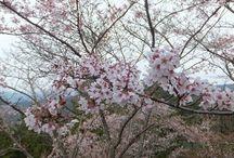 เที่ยวญี่ปุ่น / เที่ยวญี่ปุ่น เที่ยวญี่ปุ่น pantip เที่ยวญี่ปุ่นด้วยตัวเอง