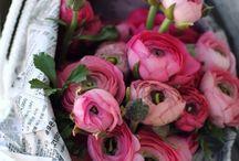 Florals / by Rachel Crowe