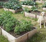 In a Garden so Green / by Reagen