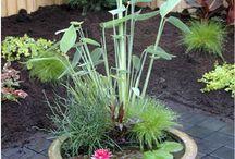 plant n garden