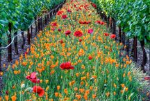 Vineyard Photography / Appreciate vineyard views from around the world. We stock products from some of these...others are pinned because they're absolutely stunning photography.