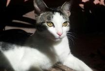 mis gatos / Watson, Lenny y Arya