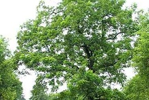 Trees I want for new property