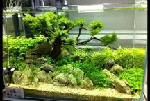 Arun's Aquascaping Inspirations / creating miniature worlds underwater