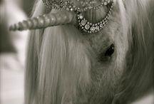 Egyszarvú lovak