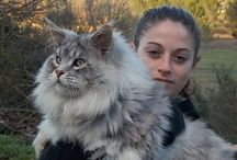 GORGEOUS BEAUTIFUL UNBELIEVEABLE CATS.