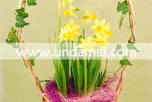 COSURI CU FLORI / Aranjamente de flori delicate in suport
