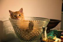 cat Treats/Meals