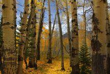 Fall / by Gayle Perrett