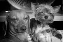 Pets / by France Rocha