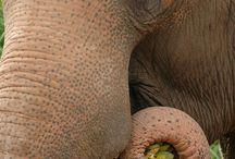 Fauna / by Shelley Bean