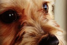 My doggie / by miriam Alexandrea