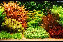 Dutch aquascape