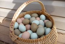 Backyard Chickens.. and A Duck / How to Raise a Backyard Flock on less than a 1/4 of an acre. Tips on how to choose your Chicken Breed, and  the Maintenance they require, to live Healthy, Productive lives.  www.villagehomesteadingaa.weebly.com / by Nicole Streeter