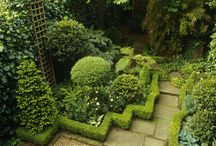 Evergreen hedging and topiary