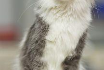 || CATS ||