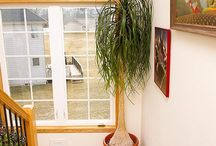 House/sunroom plants / by Linda Engstrom