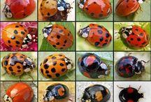 Bug-life