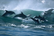 Dolphins  / by Ann Holt