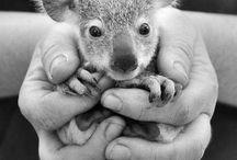 We Love Animals / by KimnRichard Sheffield