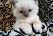 Adorable Puppies & Kittens / When you need some cuteness in your life!