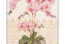 severine woog / orchidee