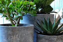 Interiør blomster/planter