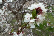 My Garden / #nature #garden  Full album: https://photos.google.com/album/AF1QipOErAwIhXKuxwQYhGLhwsr10UBenKqFwcNLkq5Y
