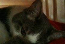My amazing cats / Nando, Ariel, Sean e Peter