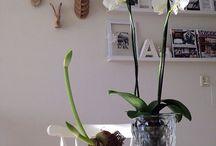 Woondecoratie | Voorjaar 2015