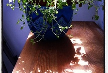 Plants / by shayla Jones