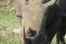 Other Photos of some wildlife taken while on safarei with visiting guests to the Kruger National Park