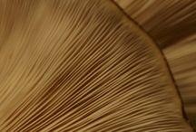 Mushrooms / Home-grown mushrooms to grow indoors from the Espresso Mushroom Company.