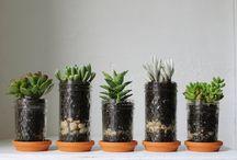 Pot plants