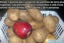 Anti germination pommes de terre