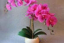 Орхидеии