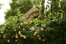 The Rose Garden / by Akemi Gardens