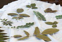 How it was made - ecoprinting, ecoprint, botanical print / Fashion brand - POET.KA