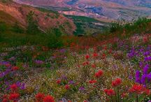 Mount St. Helens Photographs / Beautiful images of this mysterious volcano in Washington State.