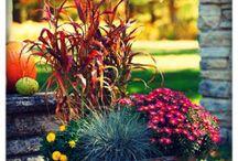 kompozycje kwiatow w donicach