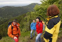 Duitsland: Thüringen / Thüringen staat bekend als het groene hart van Duitsland en barst van de toeristische attracties. De regio beschikt over prachtige natuurlandschappen en staat bol van de cultuur. Uitgestrekte bossen, heuvels, kastelen, kloosters; het is slechts een kleine greep uit wat Thüringen te bieden heeft. Bovendien stammen er diverse beroemdheden uit Thüringen, die zowel de Duitse als West-Europese cultuur hebben beïnvloed. Lees meer over Thüringen: http://www.indebergen.nl/vakantie/duitsland/thuringen/