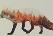 Füchse + andere Waldtiere