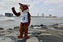 Briggy the Fox / The Ashore Realty mascot representing beautiful Brigantine Beach, NJ