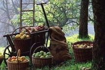 poranek w sadzie