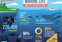 Kapiti Marine Reserve