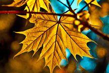 Осень / Autumn / очарование осени...