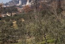 Assisi, Umbria - Az. Agricola San Potente