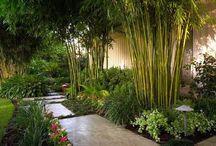 FT garden
