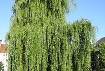 Allerlei soorten tuinen / Ook uit de geschiedenis