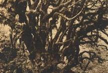 Trees / by Jessica Kaufman